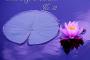 VA - New Age Relaxation No.31 (2019) MP3