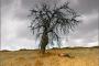 Дикая груша / The Wild Pear Tree / Ahlat Agaci (2018) BDRip от MegaPeer | A
