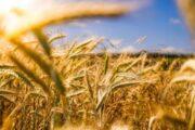 Хакеры атаковали крупную фермерскую компанию в США—  это может вызвать дефицит продовольствия